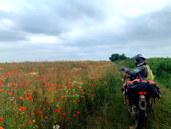 TET Poland fields poppy seeds KTM 690