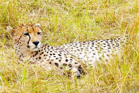motorcycle tour to Africa Tanzania animals cheetah