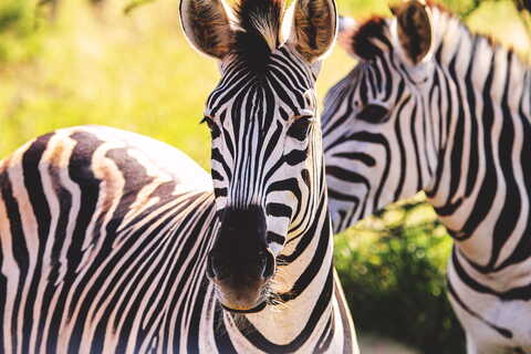 motorcycle tour to Africa Tanzania zebras