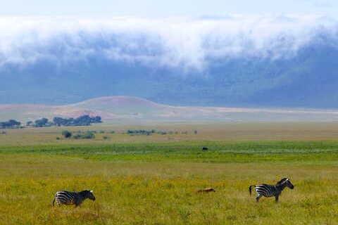 motorcycle tour Africa animals zebras
