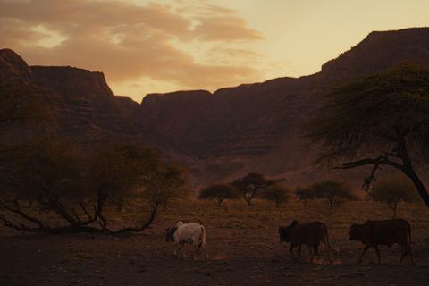 motorcycle tour to Africa Tanzania buffalo sunset