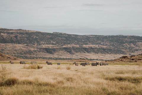 Wyprawa motocyklowa do Afryki step dzikie zwierzęta